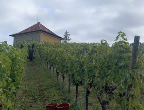 PlanQuadrat: Stolzer Besitzer eines Weinbergs – wie die Jungfrau zum Kinde.